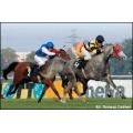 Rekordowa wygrana na wyścigach konnych